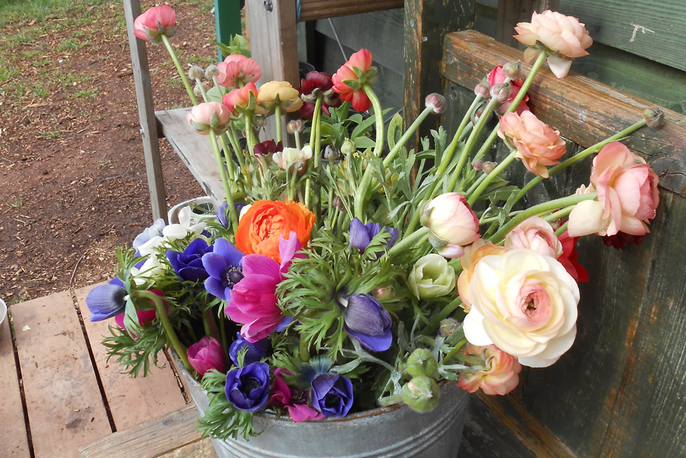 Bucket of flowers to buy